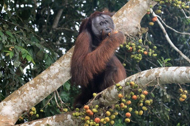 Borneo_sekretne krolestwo.jpg