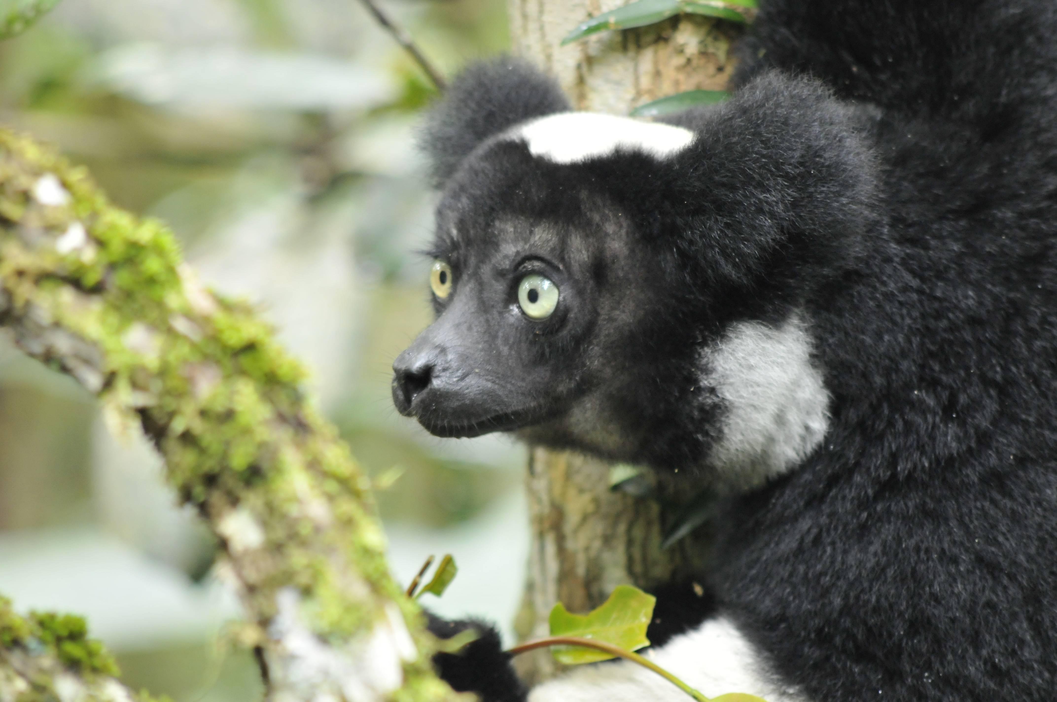Madagaskar_zwierzeta niezwykle.jpg