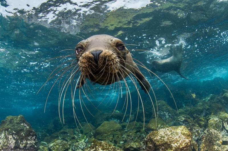 Arcytrudna misja_dzikie Galapagos.jpg