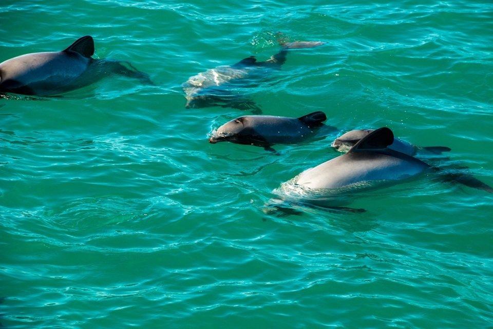Niezwykle_delfiny_02.jpg