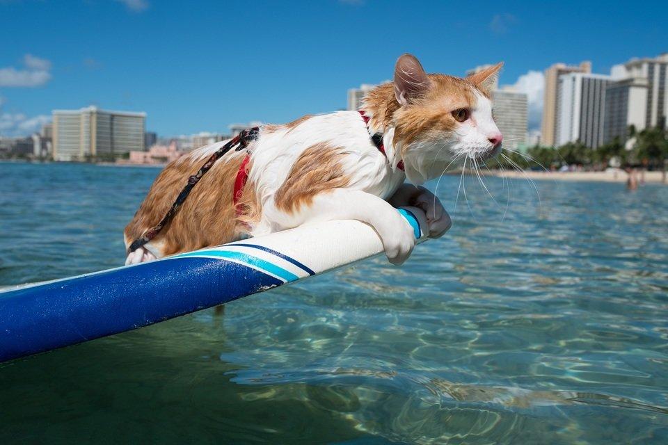 Niesamowite kociaki_male.jpg