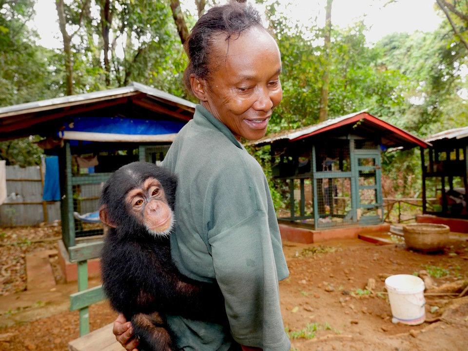 arcytrudna misja szkola dla szympansow.jpg