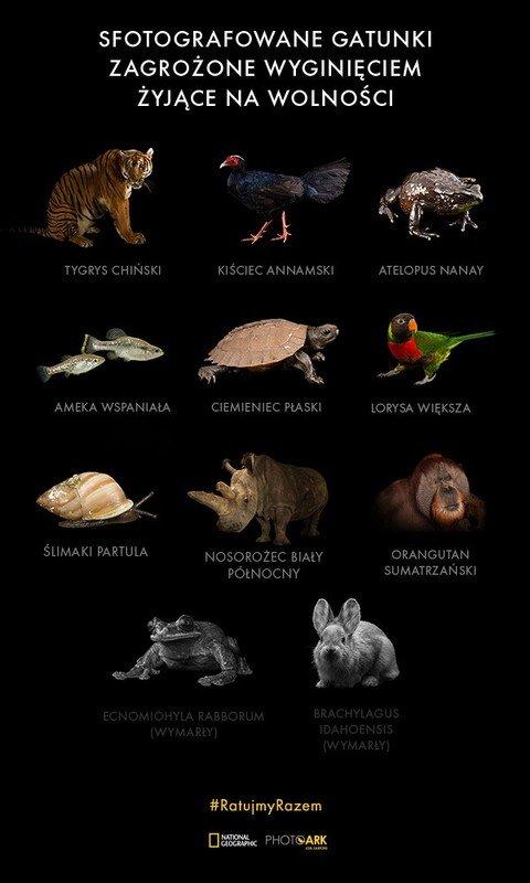 PhotoArk - sfotografowane gatunki zagrożone wyginięciem ok.jpg