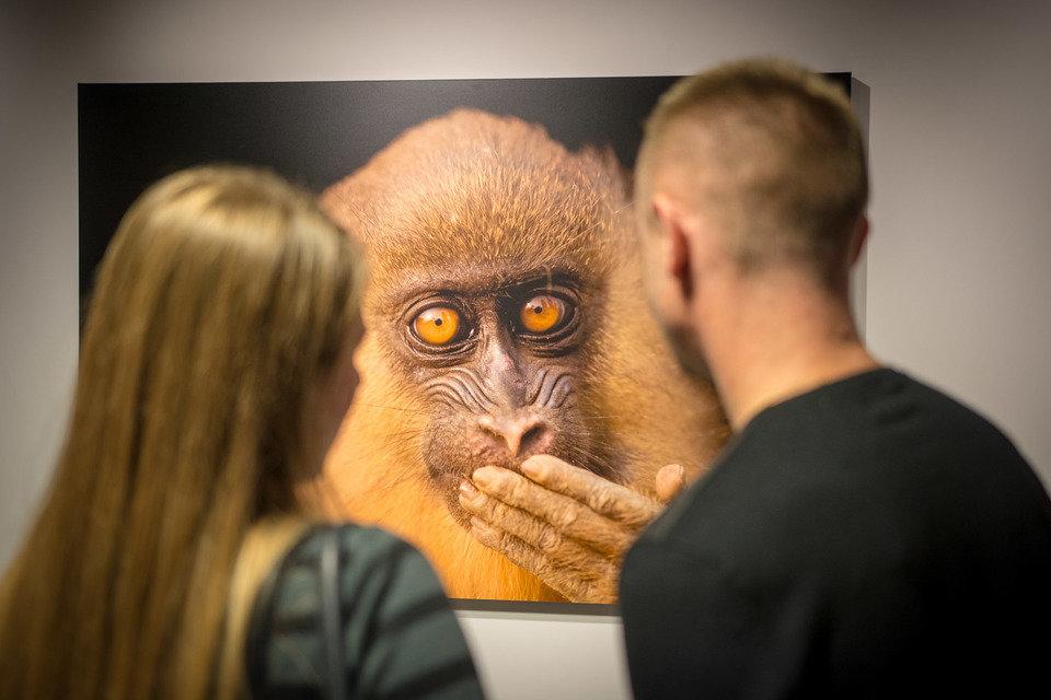 Wernisaż wystawy National Geographic Photo Ark. Największa wystawa zagrożonych gatunków na PGE Narodowym, natgeophotoark.org 4.jpg