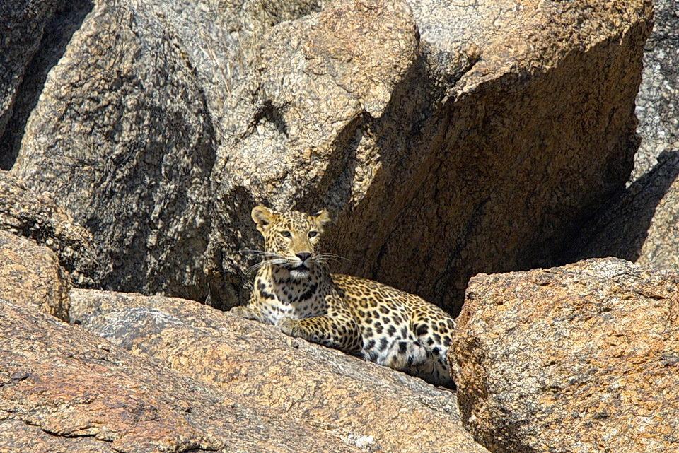 LeopardRocks_Ep101_02.jpg