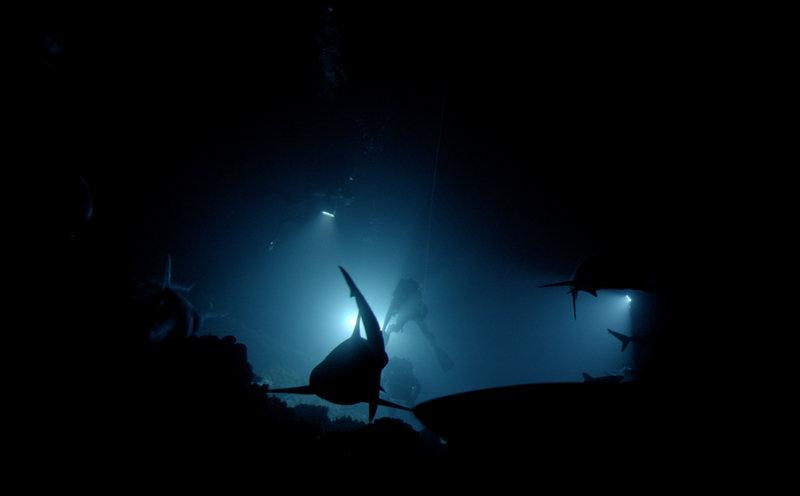 Siedemset rekinów 10.jpg