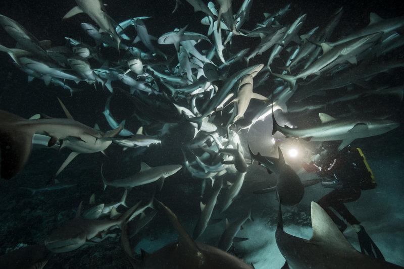 Siedemset rekinów 3.jpg