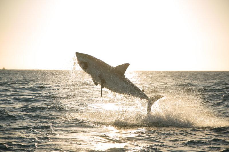 Rekiny rządzą 2.jpg