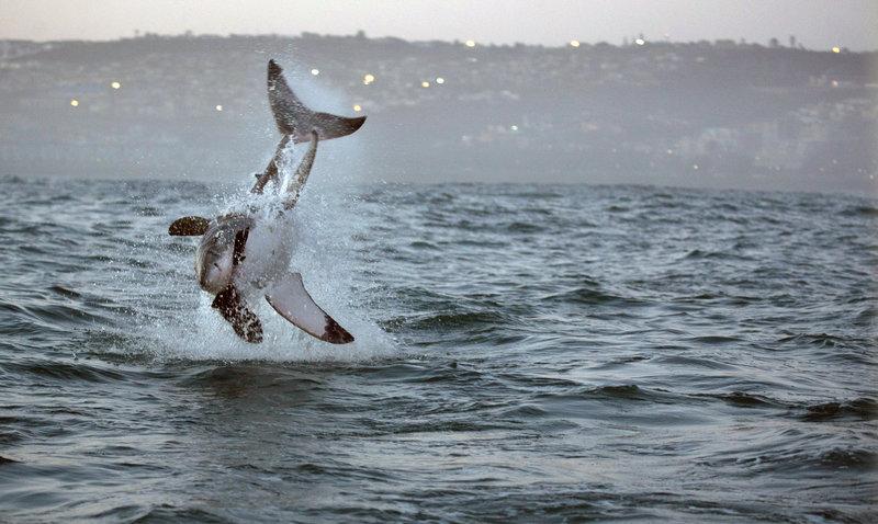 Rekiny rządzą 3.jpg