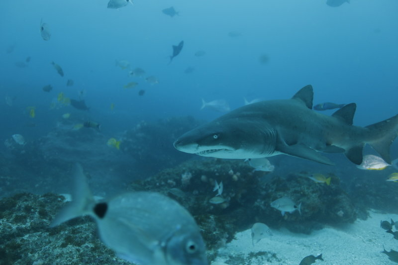 Rekiny rządzą 1.jpg