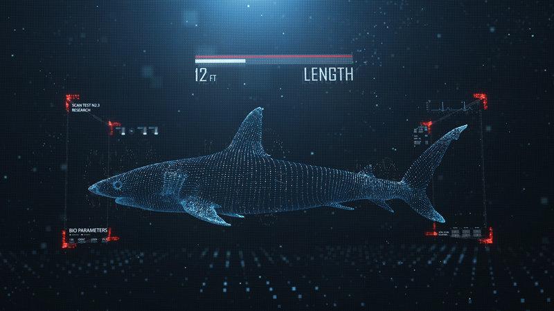 Rekin kontra tuńczyk 5.jpg
