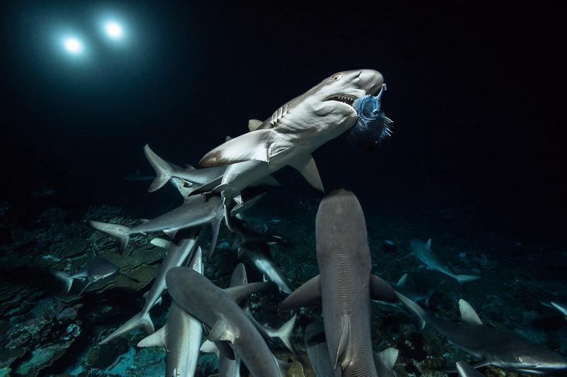 Siedemset rekinów 4.jpg