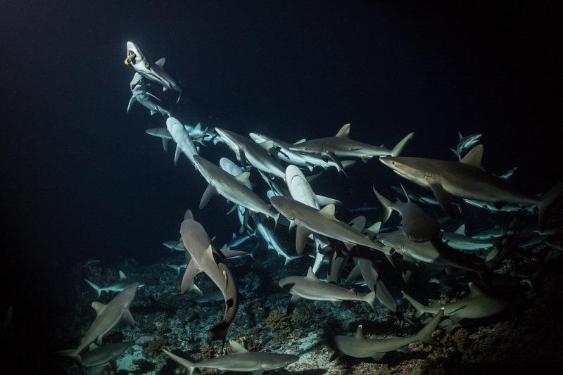 Siedemset rekinów 5.jpg
