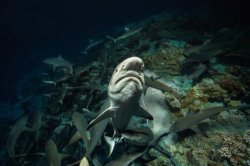 Siedemset rekinów 2.jpg