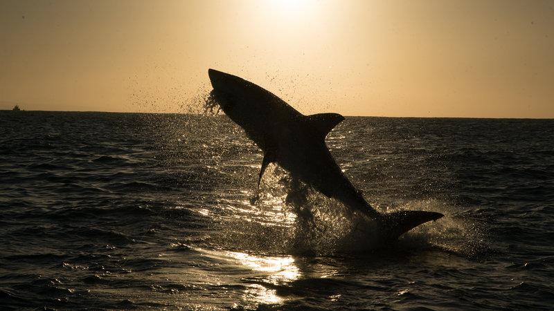 Rekiny rządzą 4.jpg