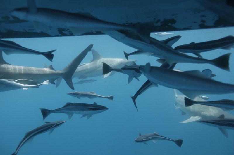 Rekiny rządzą 6.jpg