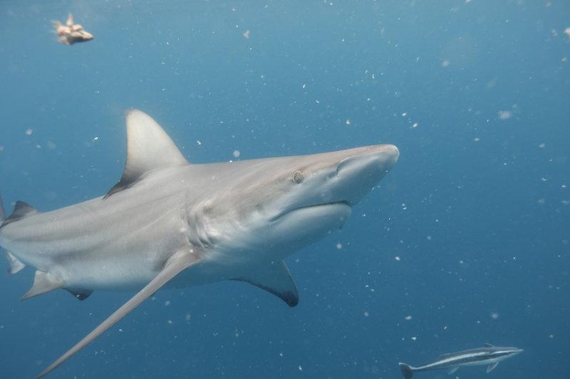 Rekiny rządzą 5.jpg