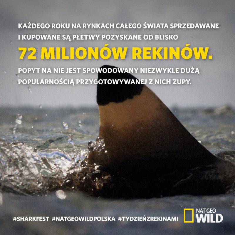 Sharkfest_ciekawostka2_1080x1080.jpg