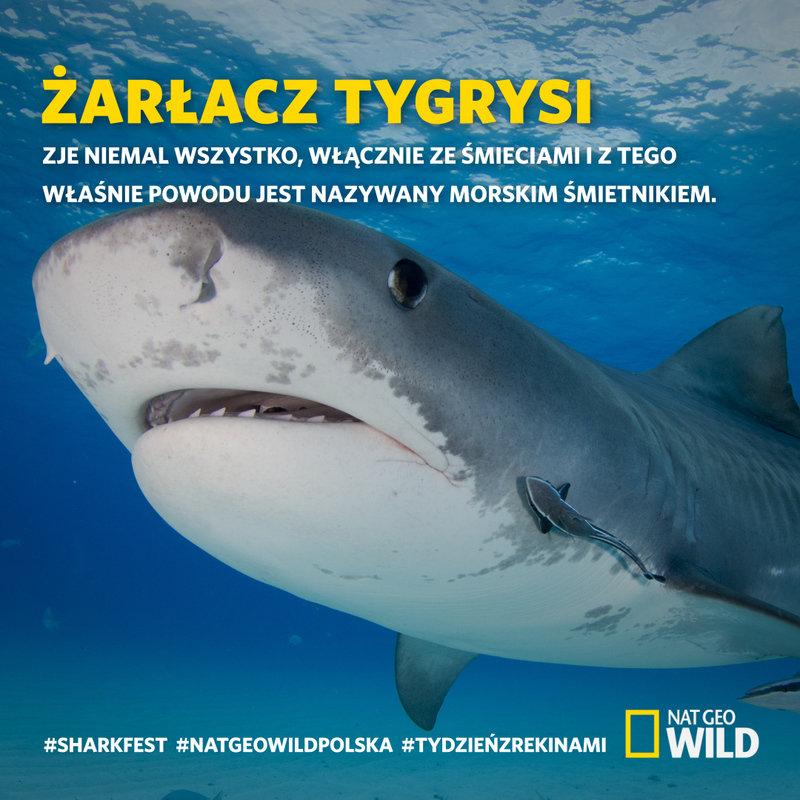 Sharkfest_ciekawostka12_1080x1080.jpg