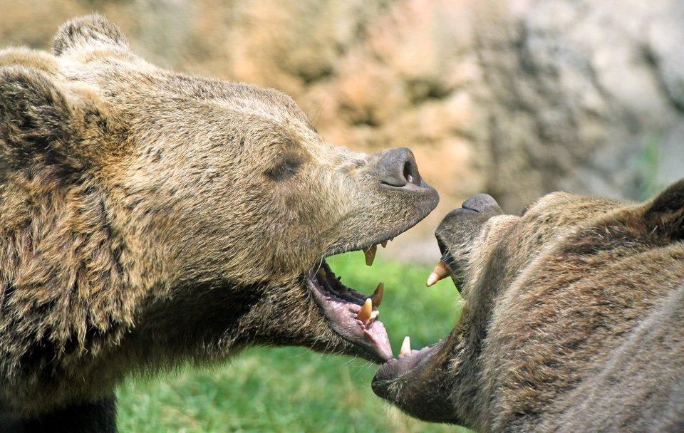 Walki zwierząt - najdziksze starcia 4.jpeg