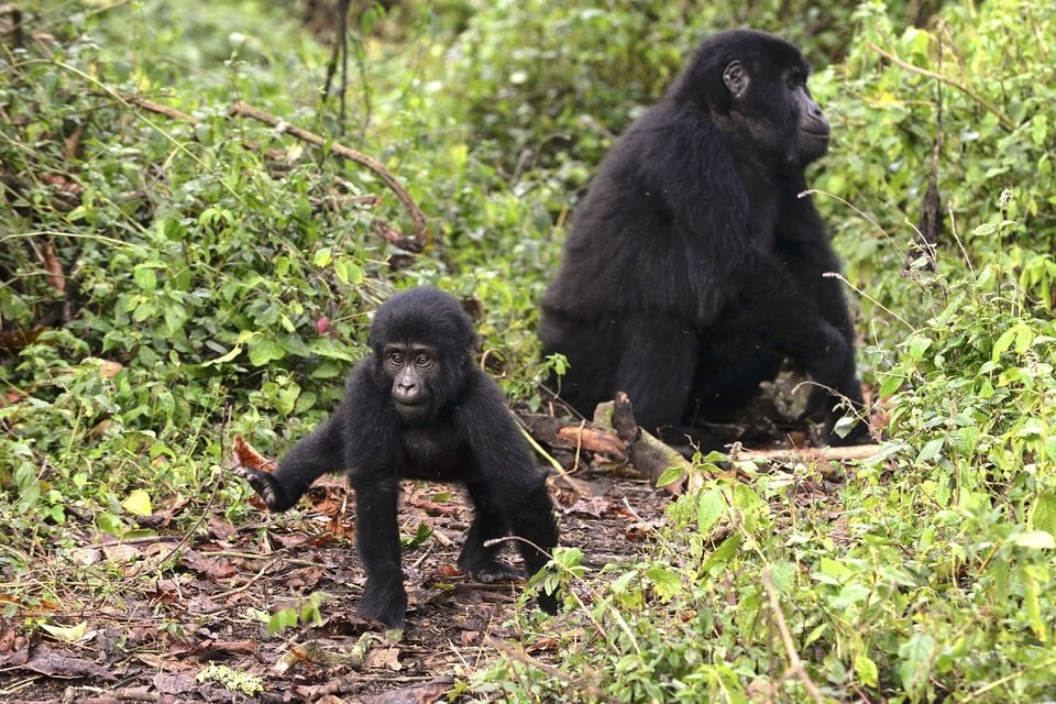 wild uganda male.jpg
