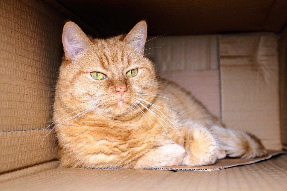 cat-1999679_1920.jpg