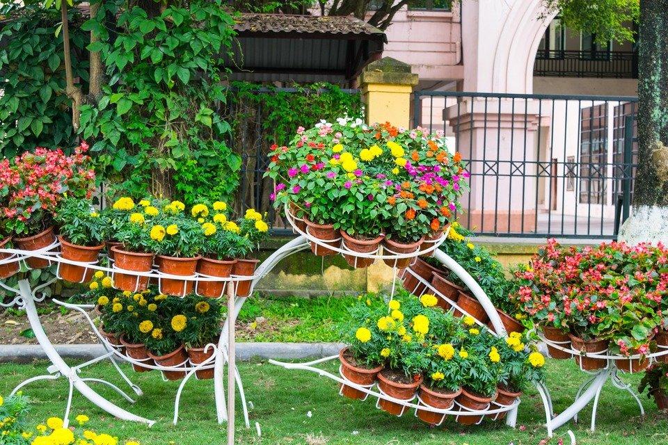 garden-721923_1920.jpg