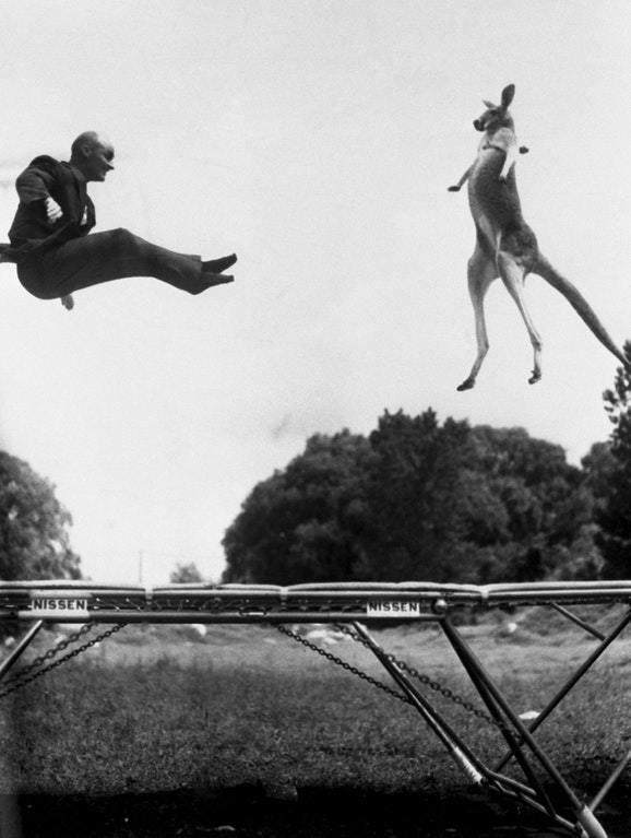 Na zdjęciu: Rok 1960, Nissen skacze w Central Parku (Nowy Jork, USA) na swojej trampolinie w towarzystwie kangura. Źródło: reddit.com