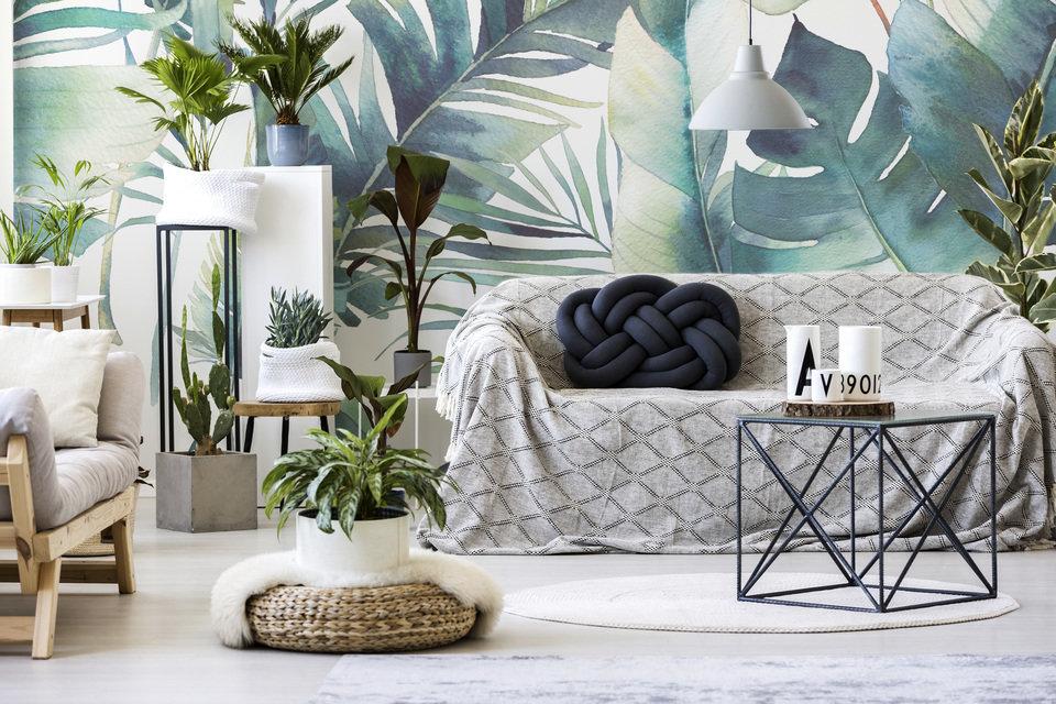 Bluish plants
