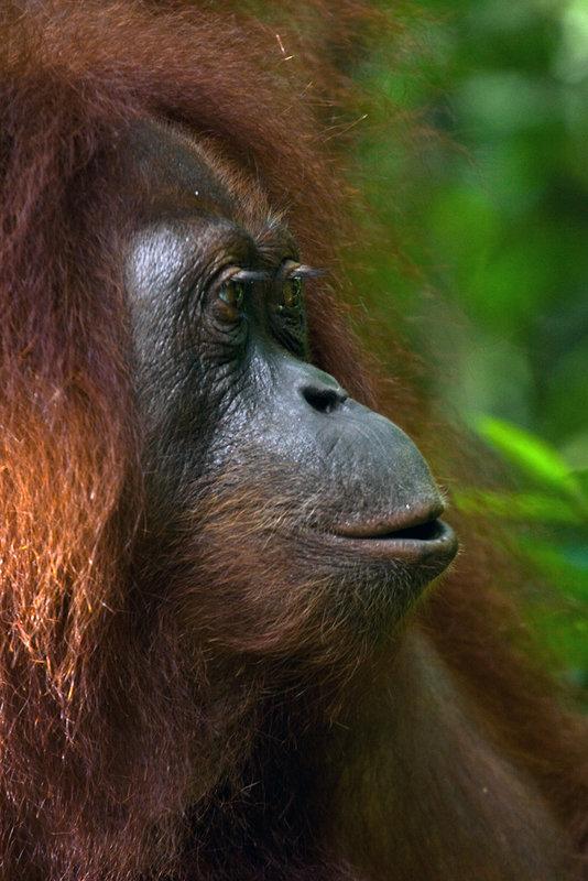 Bukit_Lawang_Sumatra_2009_Joanna_Stoga (03).jpg