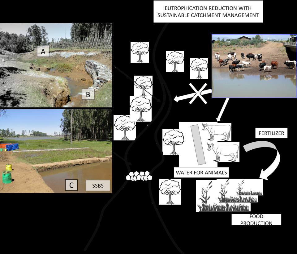 Schemat rozwiązań wdrożonych przez prof. Macieja Zalewskiego w obszarze Assela (położonym ok. 100 km. od stolicy Etiopii – Addis Ababa).