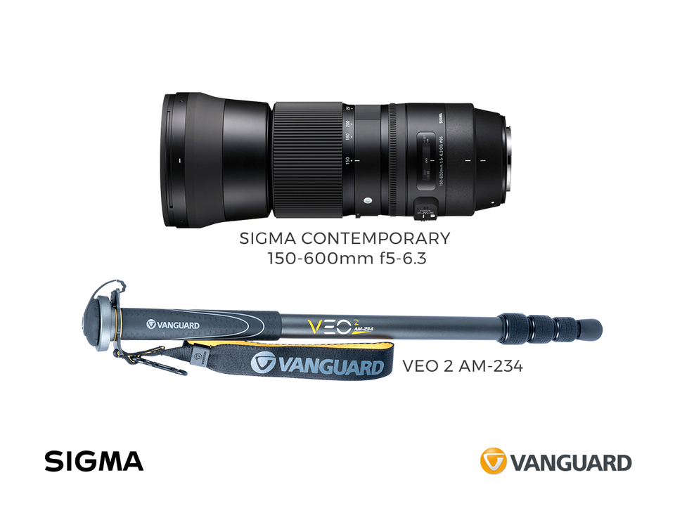 sigma+veo2_zwykla.png