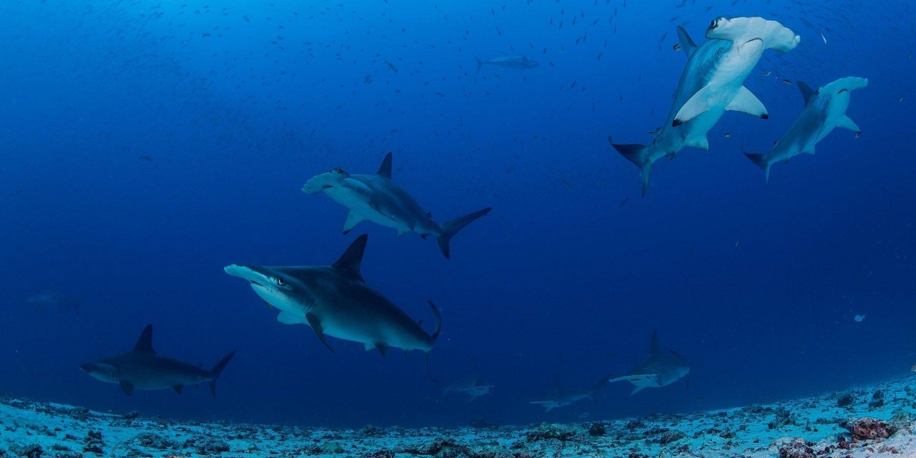 """Sekrety podwodnego królestwa rekinów.  """"Arcytrudna misja: dzikie Galapagos""""  w lutym na Nat Geo Wild"""