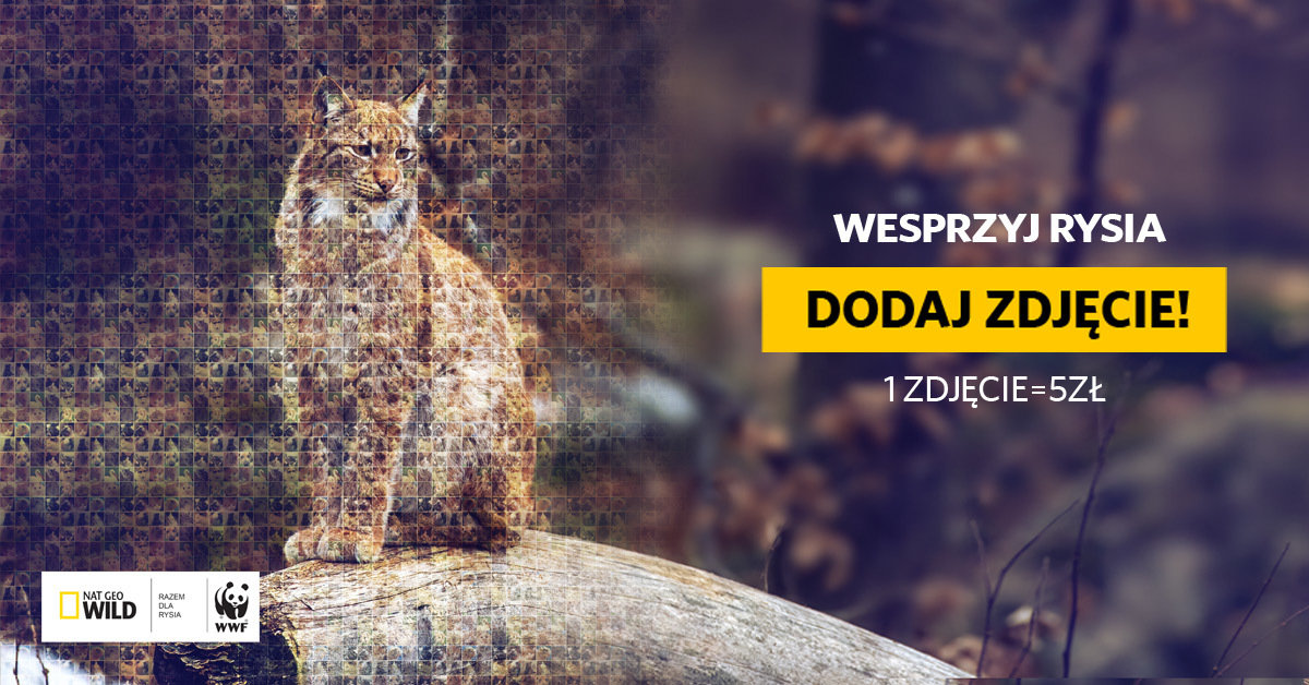 #PIĄTKADLARYSIA - akcja NAT GEO WILD z WWF POLSKA