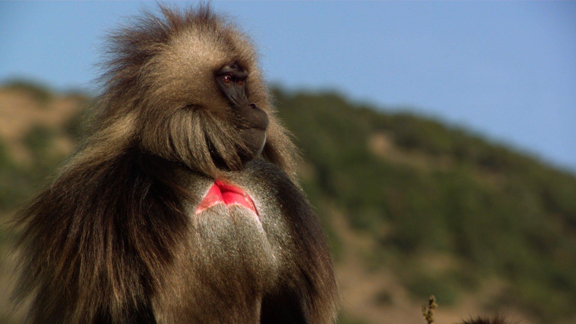 Nat Geo Wild odsłania tajemnice afrykańskich dżelad