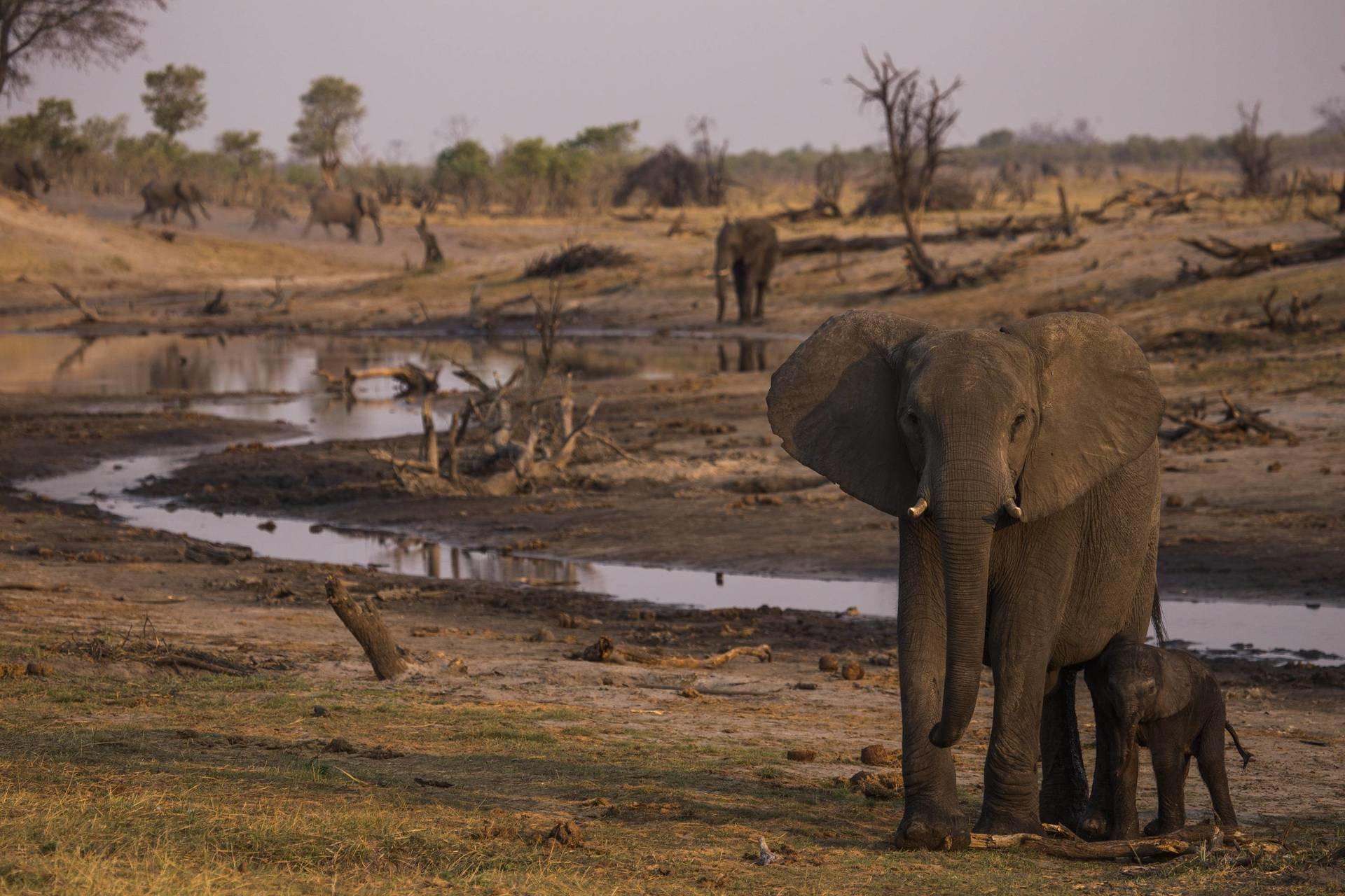 Nat Geo Wild  świętuje Światowy Dzień Słonia