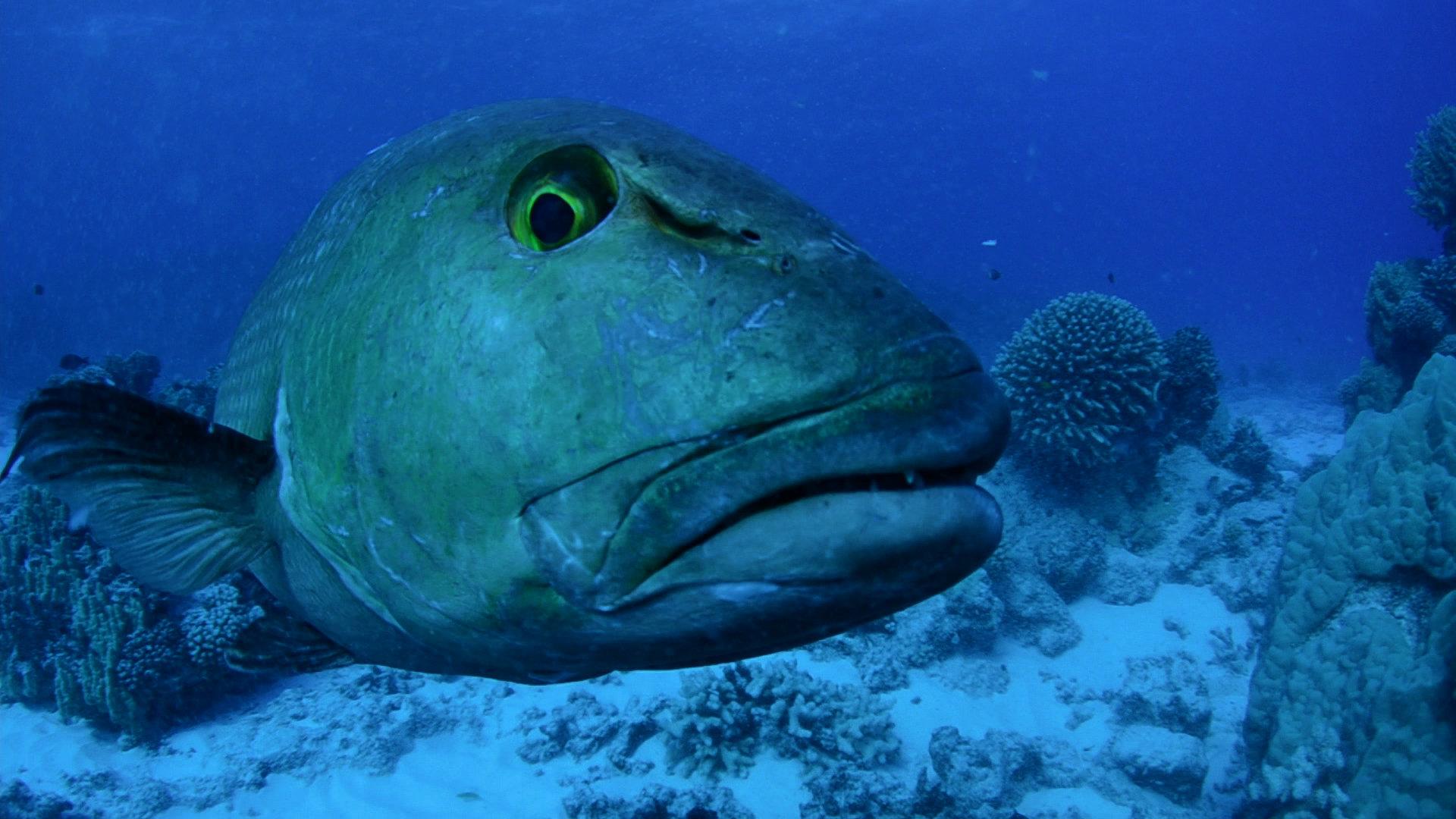 """Walka o ochronę ekosystemów morskich. """"Arcytrudna misja: ocalmy oceany""""  we wrześniu na kanale Nat Geo Wild"""