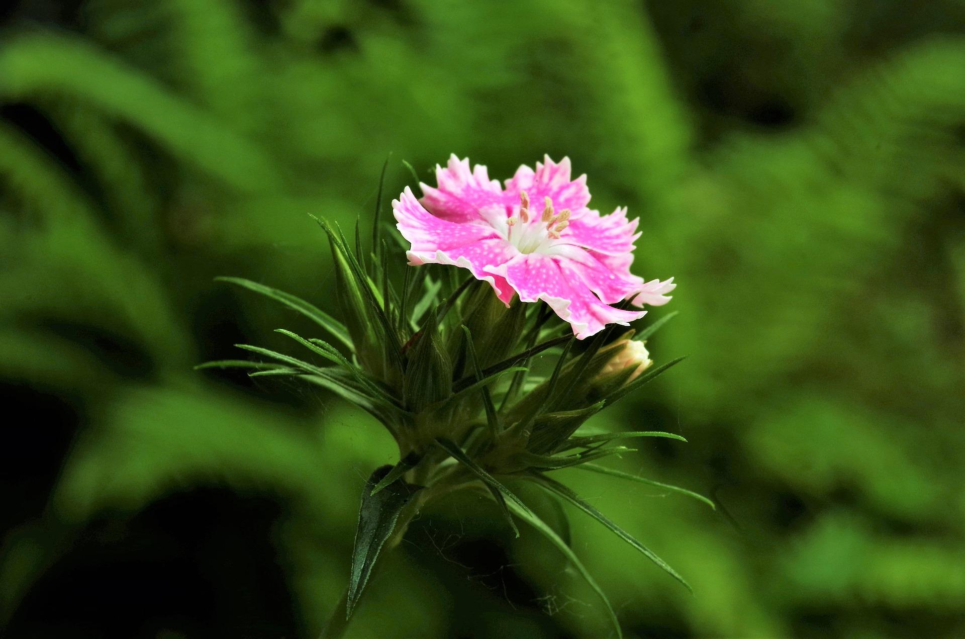 UŁ komentuje: Ochrona roślin zagrożonych wyginięciem - Uniwersytet Łódzki