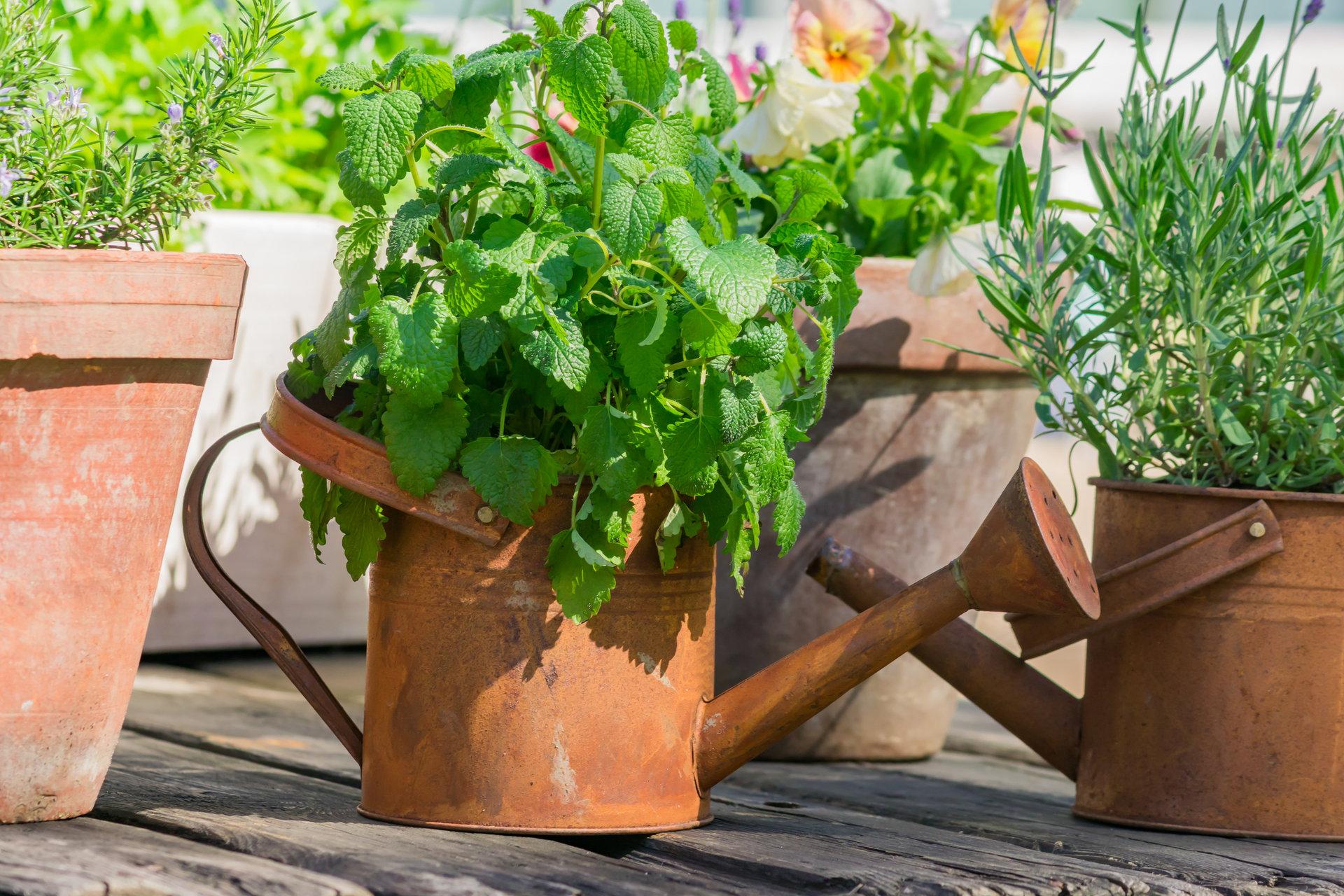 Domowy zielnik – sposób na świeże zioła i wyprawę do Włoch