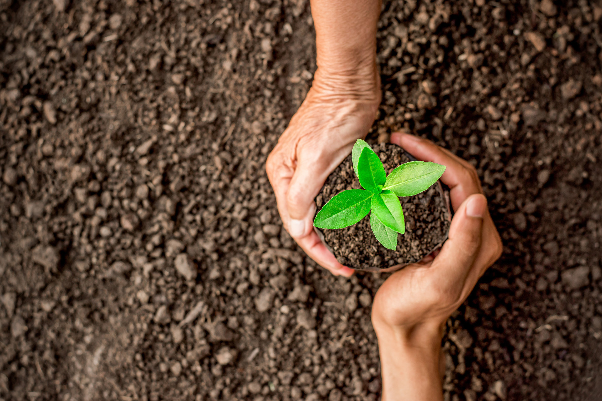 Kronospan inwestuje w ekologię. Czy Mielec będzie wreszcie bardziej zielony?