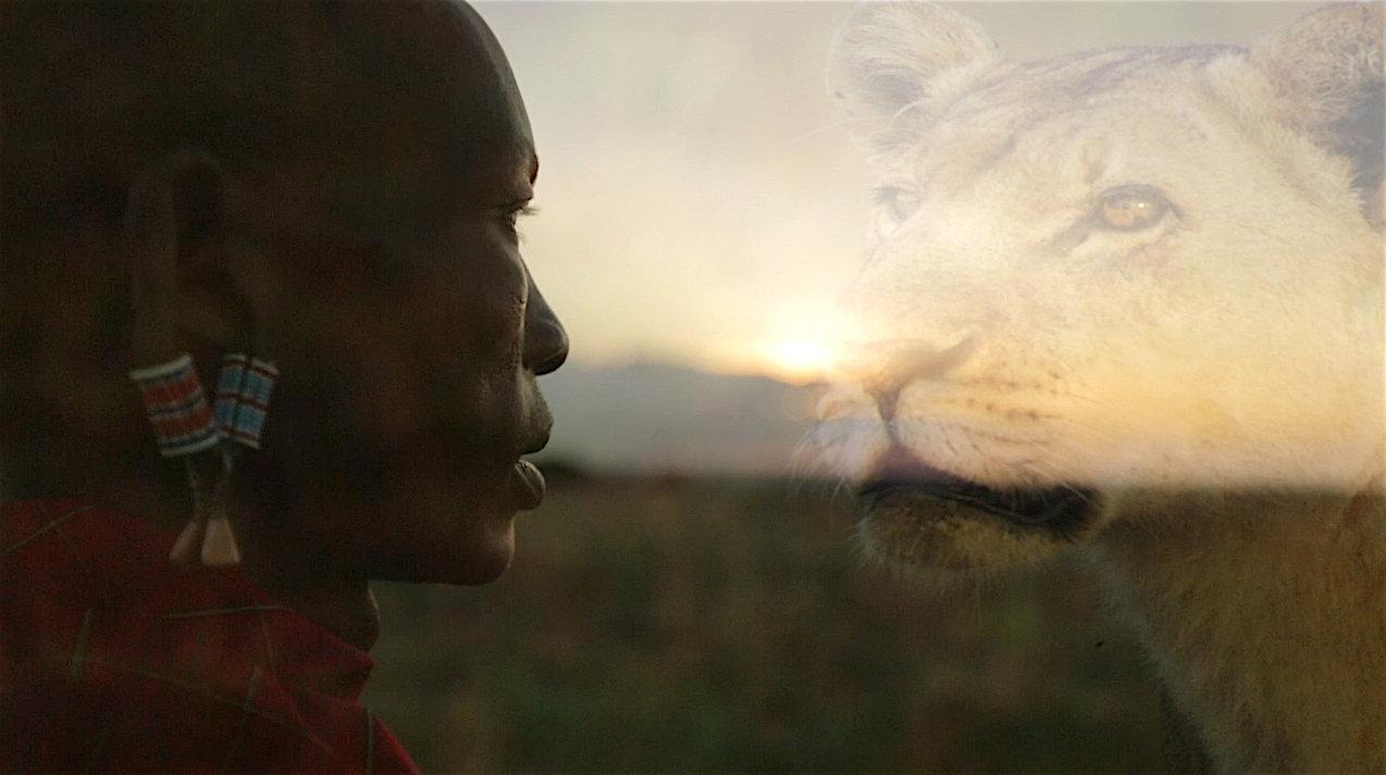 """Polowanie na medale zamiast na zagrożone gatunki. """"Lwy kontra Masajowie"""" w sierpniu na kanale Nat Geo Wild"""