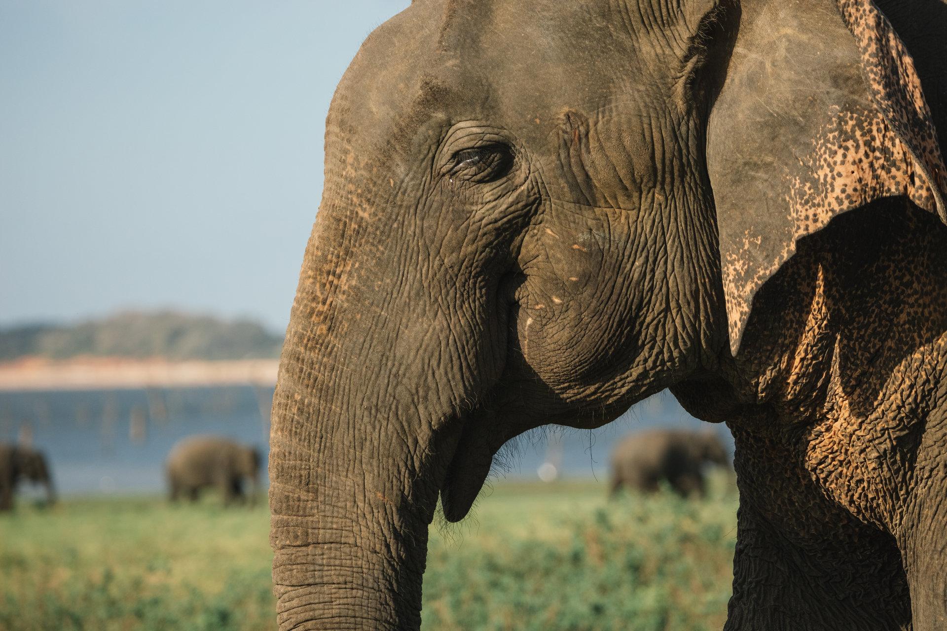 Światowy Dzień Słonia i niezwykła historia przyjaźni człowieka ze zwierzętami 12 sierpnia na kanale Nat Geo Wild